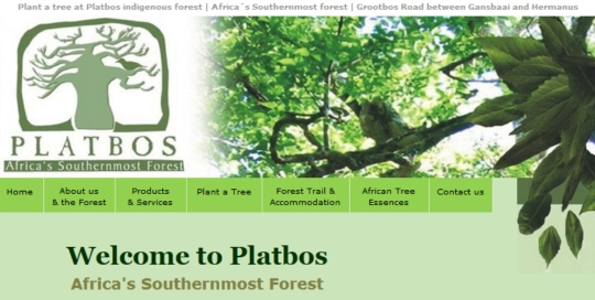 Platbos Africa's Southernmost Forest